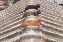 Кошки на раскаленной крыше....